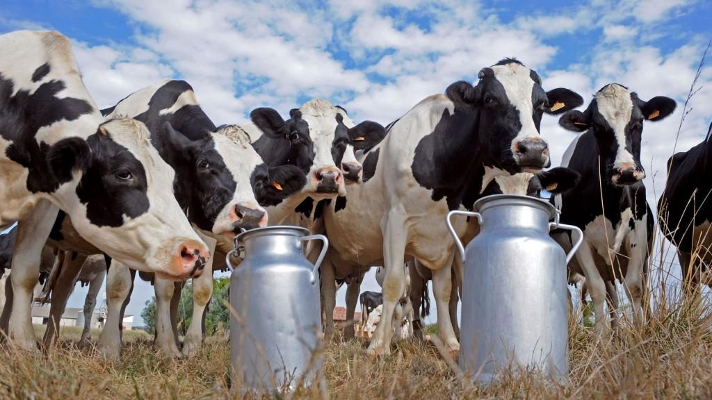 le-groupe-bel-a-annonce-mercredi-son-engagement-a-maintenir-le-prix-d-achat-du-lait-aux-producteurs-a-300-euros-les-1-000-litres-pour-les-mois-de-janvier-et-fevrier_5509707